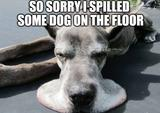 Dog on the floor memes